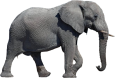 elephant-transparent-background
